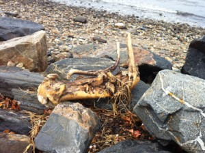 Driftwood-small
